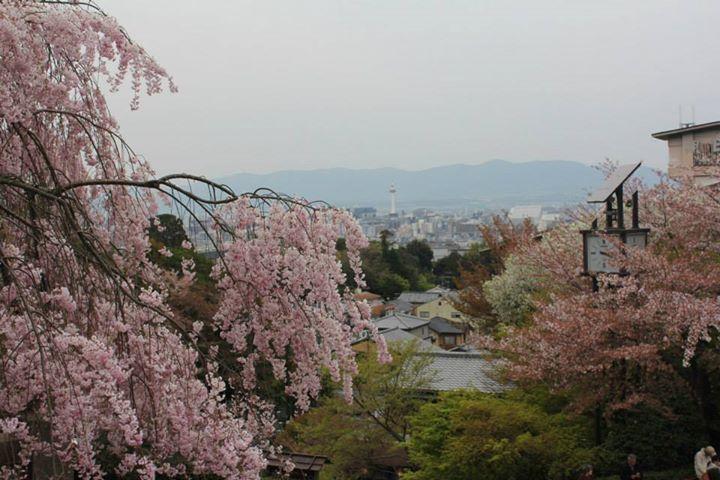 12.04.2014 Kyoto - Japan